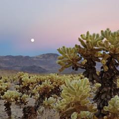 Закат в пустыне Мохаве