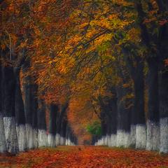 """Autumn """"Dojo"""""""