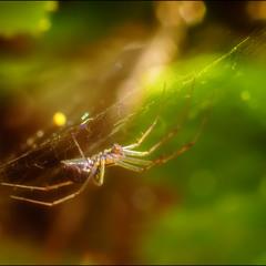 Краски осени в плетеньях паутины
