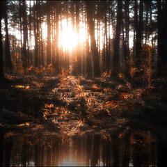 Закат в рыжем лесу