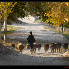 # Афганистан - 2010: ноябрь в Исталифе # из серии...