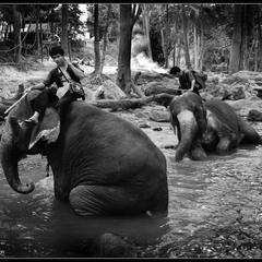 # Сны о Тайланде # из серии...