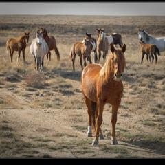# Атомные лошадки #