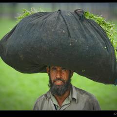 # Пакистан - 2011: мы из Пешавара # из серии...