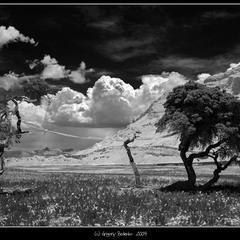 # Лес каменных деревев # из серии # Психоделический Тибет #