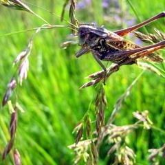 В траве сидел кузнечек.....
