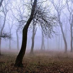 Туманные историии