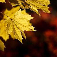 Насыщенная осень