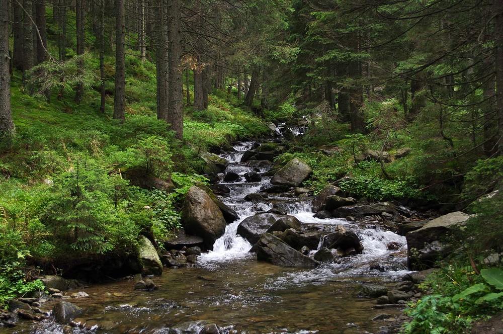 фото ручей в лесу можно перевести дебетовую