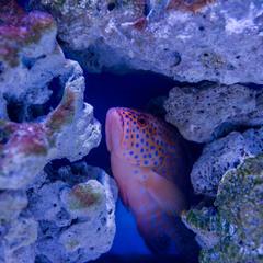 Аквариум или подводный мир