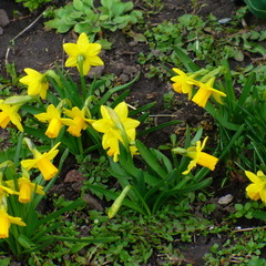 У нашего дома зацвели цветочки