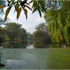 Есть в нашем парке старый пруд...