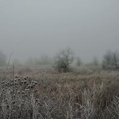 Зима, тоние линии...