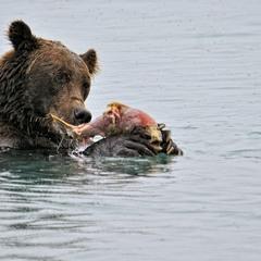 Grizzli & salmon
