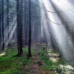 Карпати. Ліс
