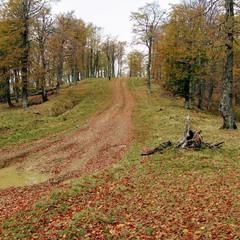 Осінь. Букові ліси.