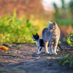 Кошкиной тропой шли они домой