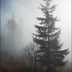 Туманная серия 2 (5)