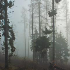 Туманная серия 2 (10)