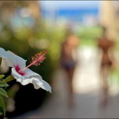 Про две грации и цветок:))