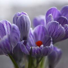 Пусть весна принесет радость,)