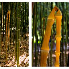 трагедия жизни одного бамбука