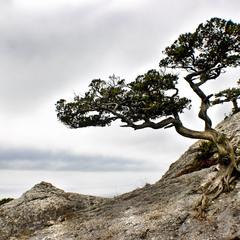 И на камнях растут деревья 2