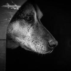Про собак приюта ...