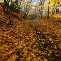 Дорога из осени