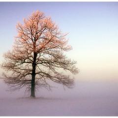 ... дерево заката