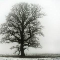 ... В ожидании снега