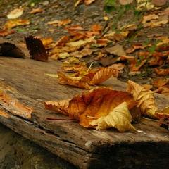Осень Золотая repost