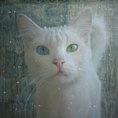 С-нежная кошка