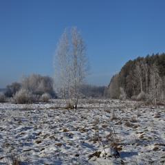 Зимове Полісся