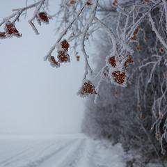 Замерзаючий туман-4