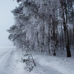Замерзаючий туман-3