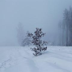 Замерзаючий туман-5