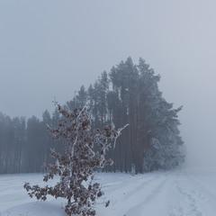 Замерзаючий туман