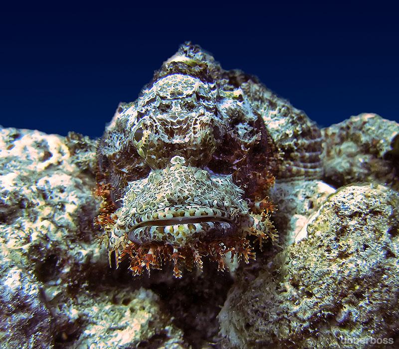 тех рыба камень картинки дна морского