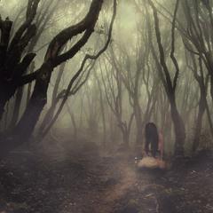 Увидимся в лесу