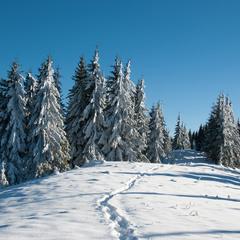 Winter Tale