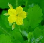 Зелене і жовте