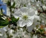 Весняні мотиви