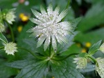 Зелена квітка