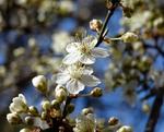 Нарешті весна