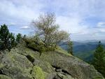 Дерево на горі