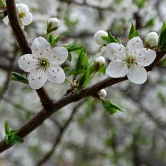 Весняний етюд
