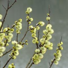 Весна над озером