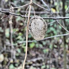Осіннє плетиво
