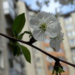 Весна серед міста